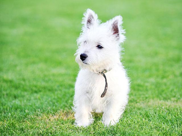 可愛的狗狗