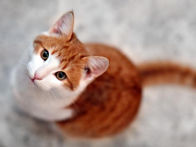 可愛的喵喵